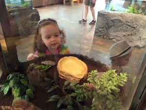 nova scotia museum halifax kids what to do