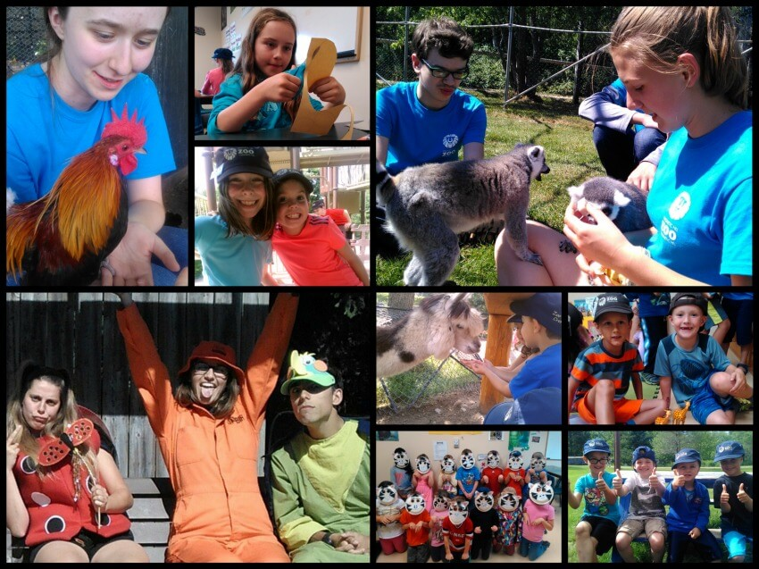 summer camp moncton zoo