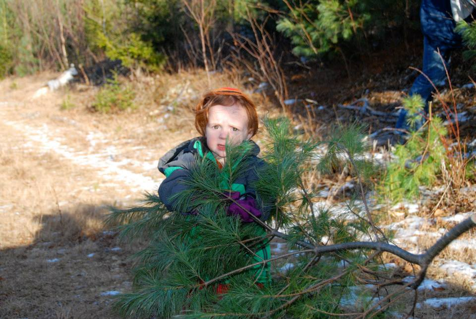 where to find a christmas tree u-pick in new brunswick