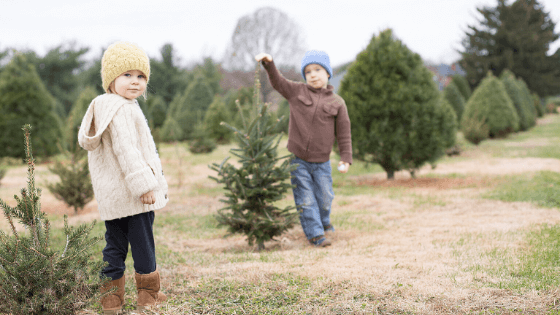 where to cut your own christmas tree in new brunswick u-pick u-cut farm photo by sarahshutter via Getty Images via Canva