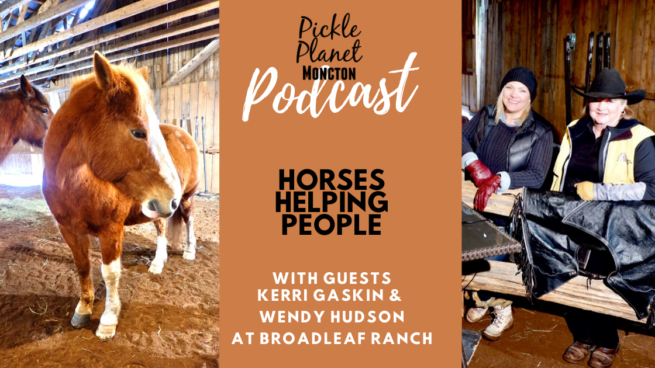 horse therapy ptsd broadleaf ranch new brunswick pickle planet moncton podcast